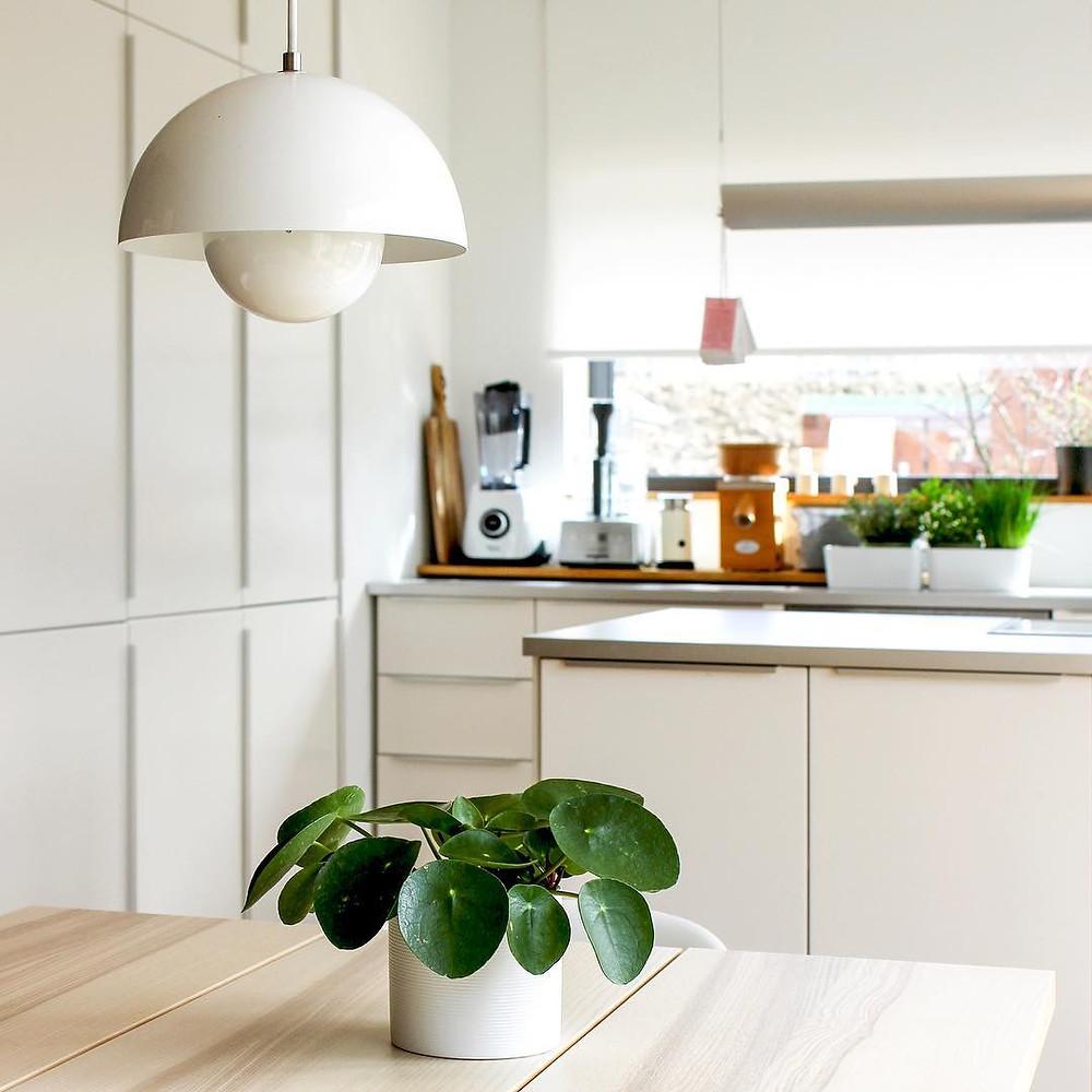 Pilea Peperomioides Decor Ideas Kitchen
