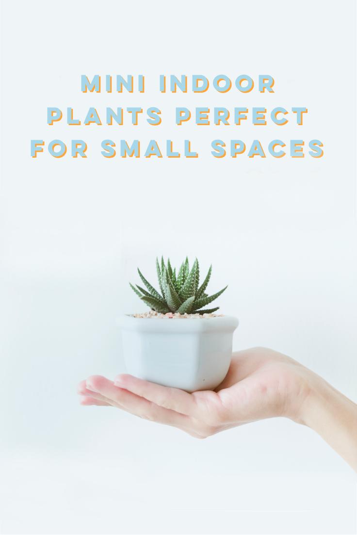 Mini Indoor Plants Perfect For Small Es