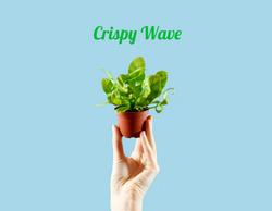 Mini Crispy Wave
