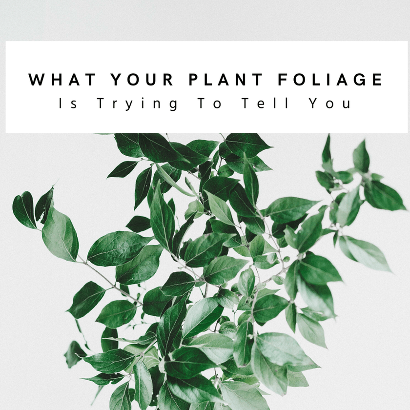 Reading The Leaves: What Your Plant's Foliage Is Trying To Tell You