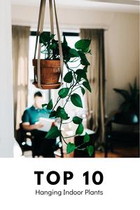 Top 10 Hanging Indoor Plants