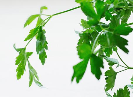 Low-Maintenance Houseplants You Can Easily Grow