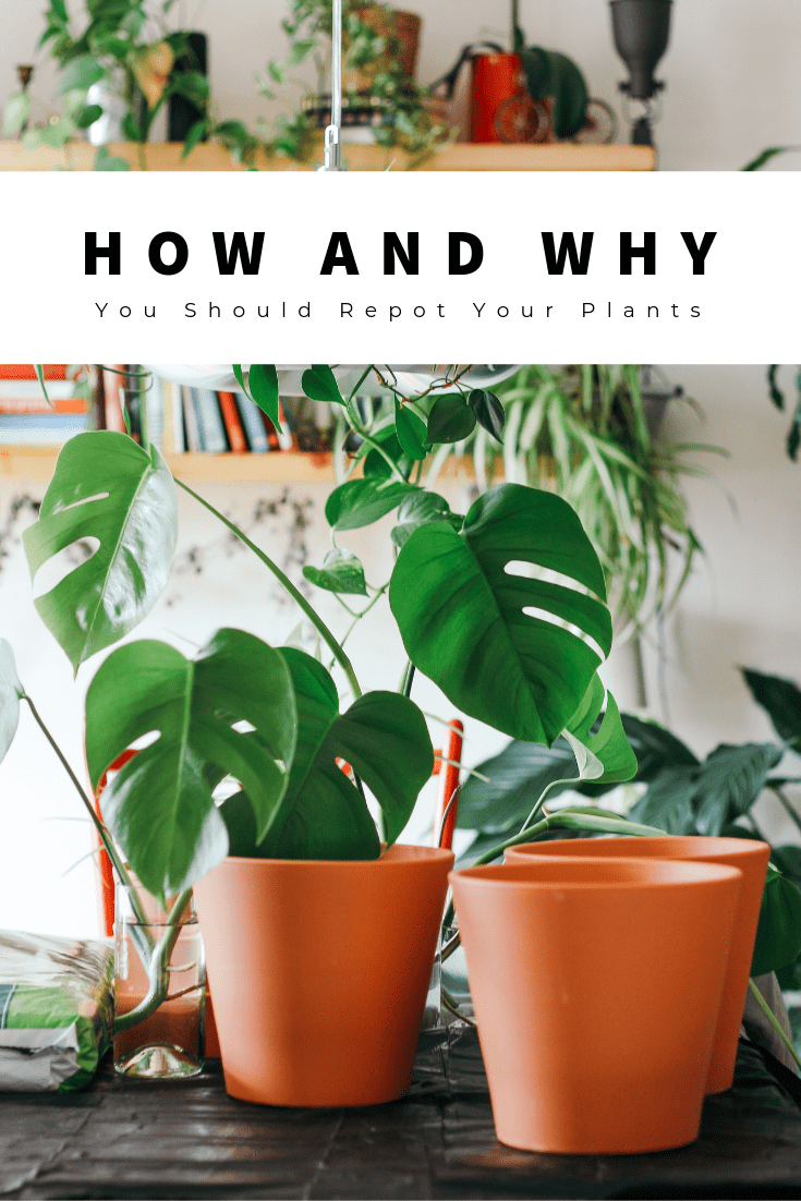 How and Why You Should Repot Your Plants