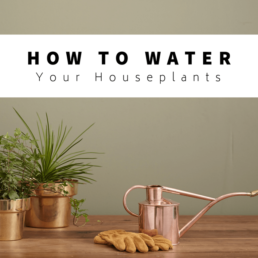 How To Water Your Houseplants: The Definitive Tutorial
