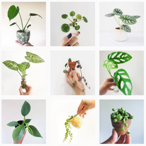 onlinebabyplants Instagram Profile To Follow If You Love Baby Plants