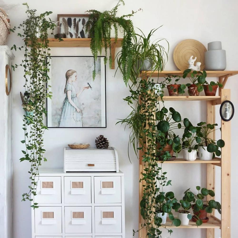 Houseplants Decor Ideas Shelves Plant Shelfie