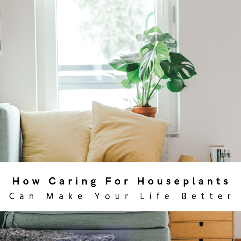How Caring For Houseplants Can Make Your Life Better