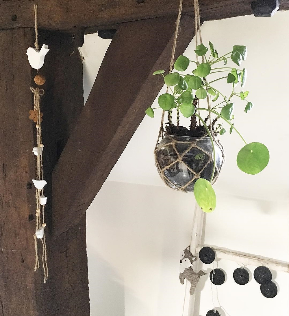 Pilea Peperomioides decor ideas hanging terrarium