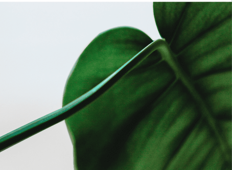 Low-Light Houseplants Perfect For Dark Rooms