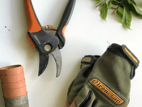 Pruning Houseplants: An Easy Tutorial