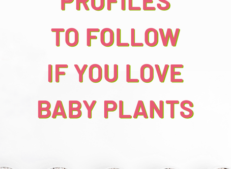 5 Instagram Profiles To Follow If You Love Baby Plants