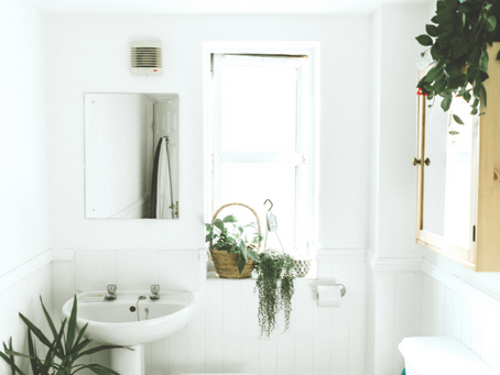 Beautiful Plants For The Bathroom