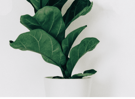Things You Are Probably Doing Wrong With Your Plants