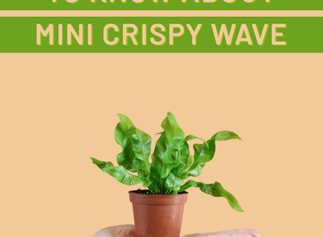 A Breath Of Fresh Air: All You Need To Know About Mini Crispy Wave