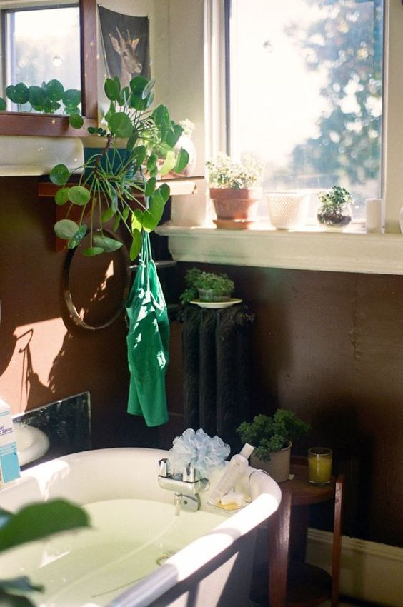Pilea Peperomioides decor ideas bathroom