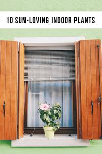 10 Sun-Loving Indoor Plants