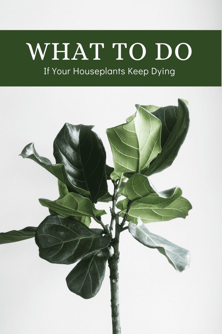 What To Do If Your Houseplants Keep Dying