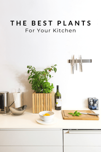 The Best Plants For The Kitchen