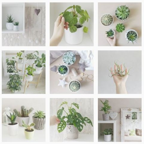 curlyplantlady Instagram Profiles To Follow If You Love Baby Plants