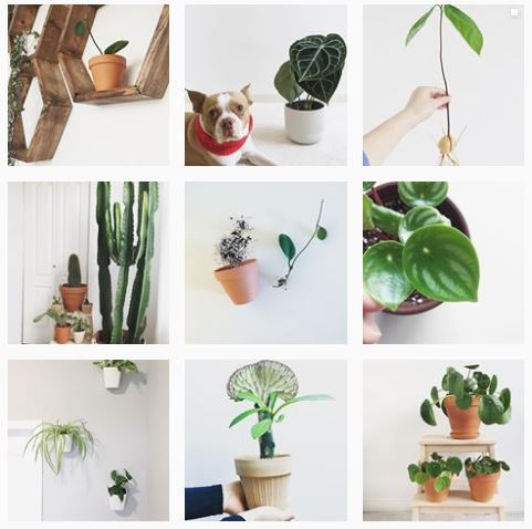 tiny_greens Instagram Profiles To Follow If You Love Baby Plants