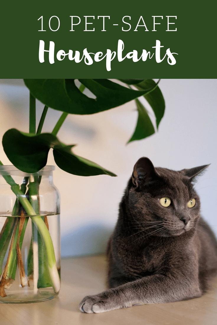 Per Safe Houseplants Non Toxic