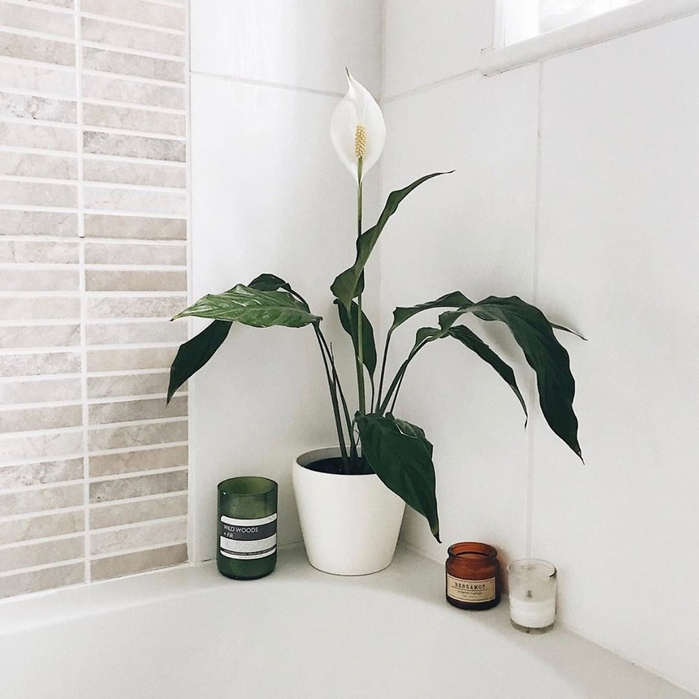 Peace Lily Cheap Houseplants You Can Easily Add To Your Home