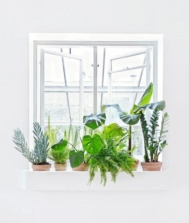 Boston Fern Plant Humidifier