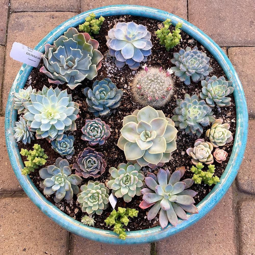Houseplants Decor Ideas Succulent Dish Garden