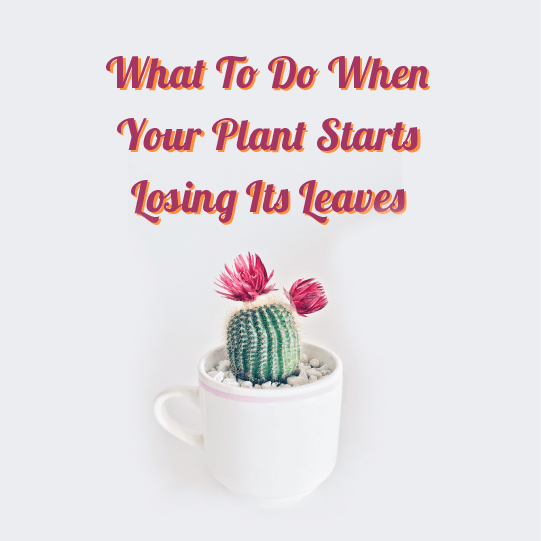 What To Do If Your Mini Plant Starts Losing Its Leaves