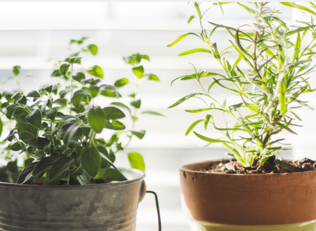 How To Protect Your Plants From Pests