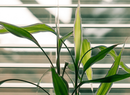Caring For Houseplants During The Summer: 10 Useful Tips