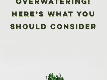How To Avoid Overwatering: Here's What You Should Consider