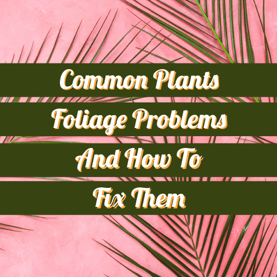 Common Plant Leaves Problems And How To Fix Them