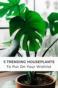 Trending Houseplants Wishlist