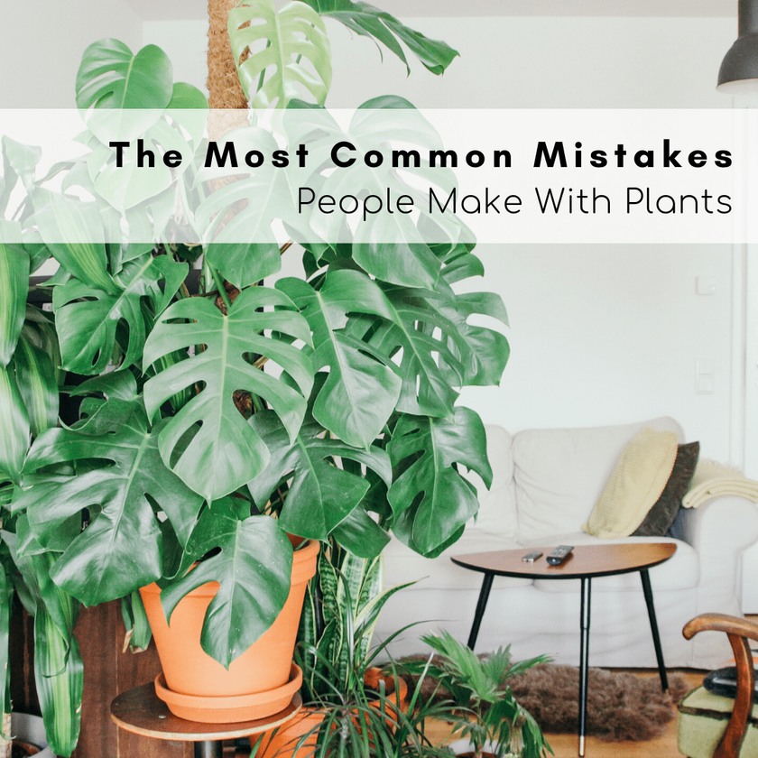 The Most Common Mistakes People Make With Plants