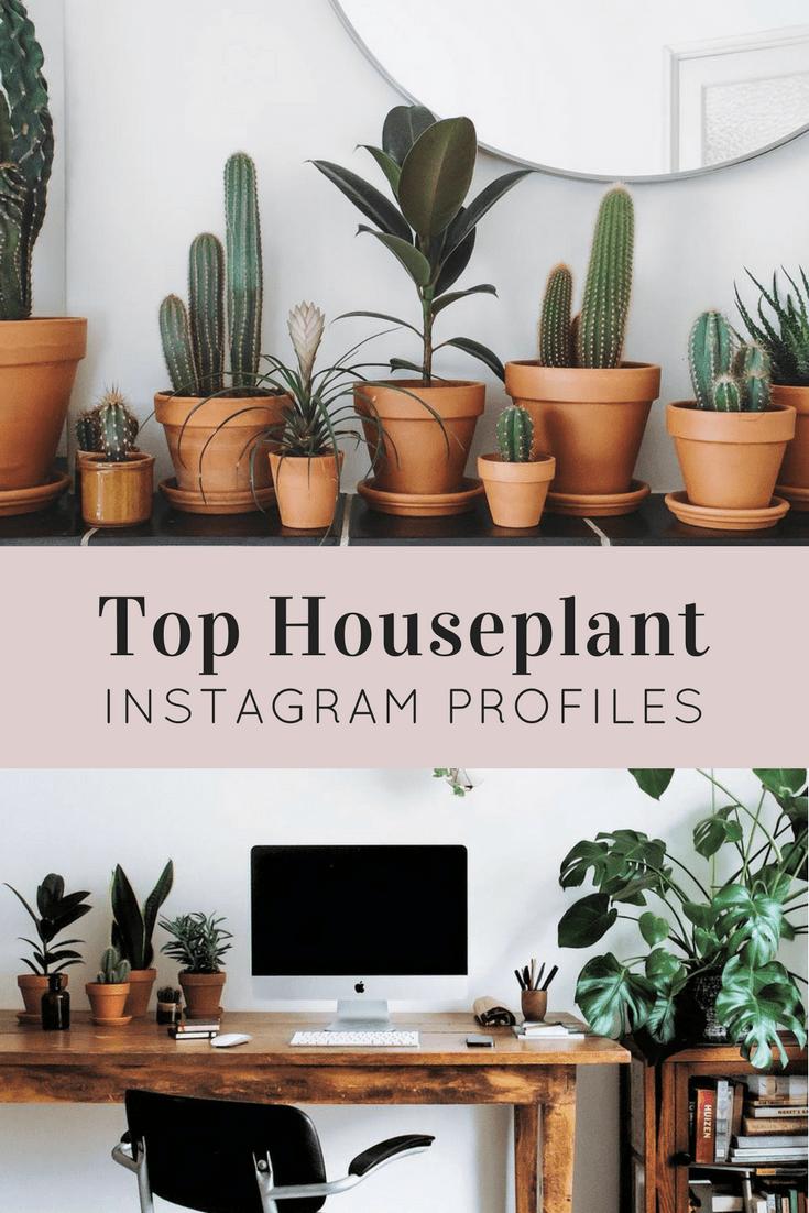 Houseplants Instagram Profiles