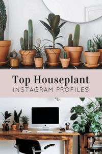 Houseplants Instagram Profiles