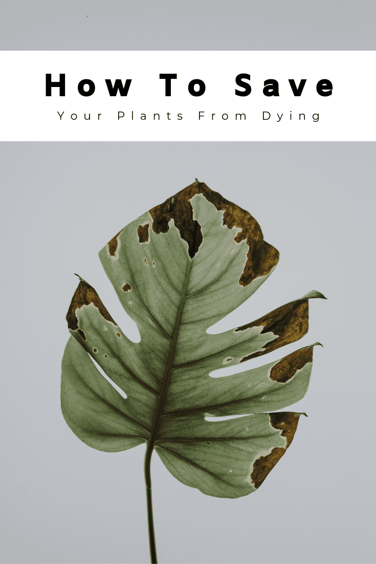 How To Save Your Plants From Dying
