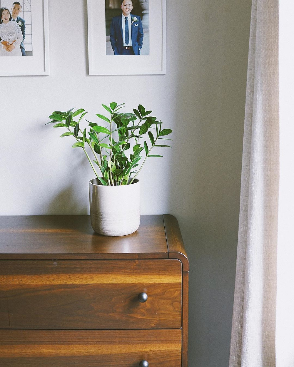 ZZ Plant Cheap Houseplants You Can Easily Add To Your Home