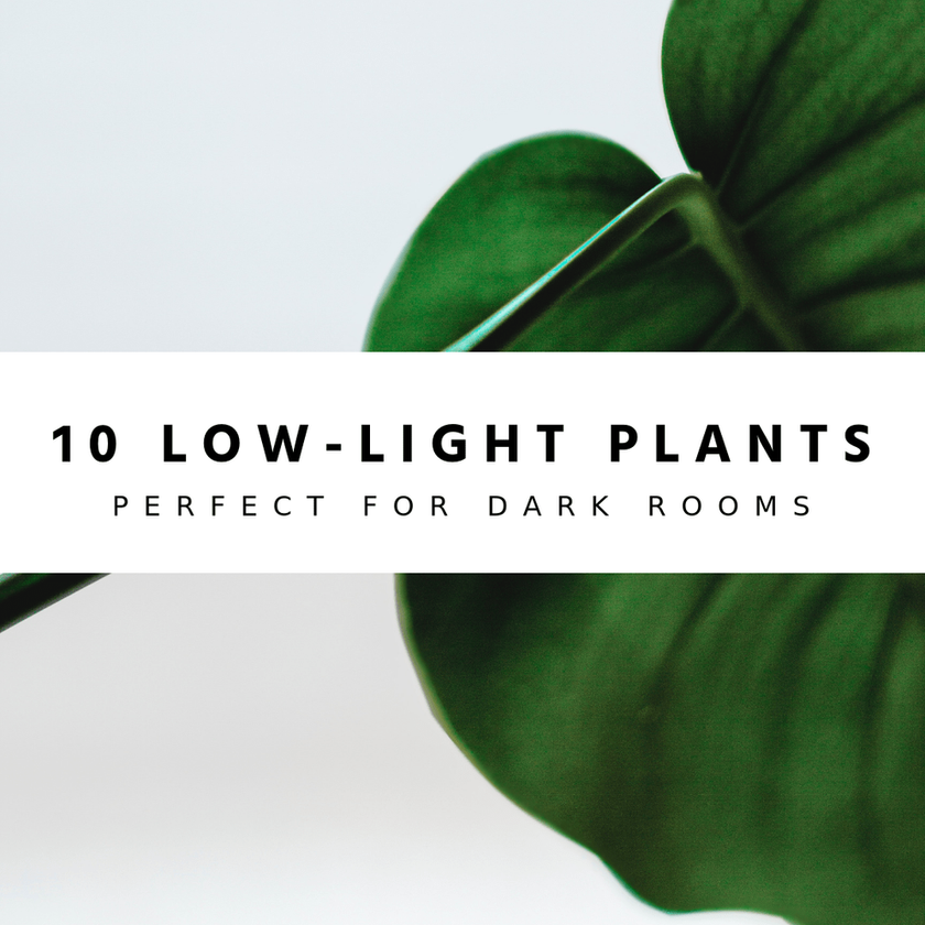 10 Low-Light Houseplants Perfect For Dark Rooms