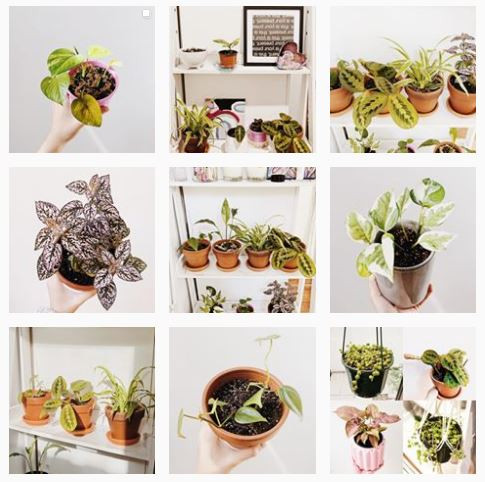 littletobigplants Instagram Profile To Follow if you love baby plants