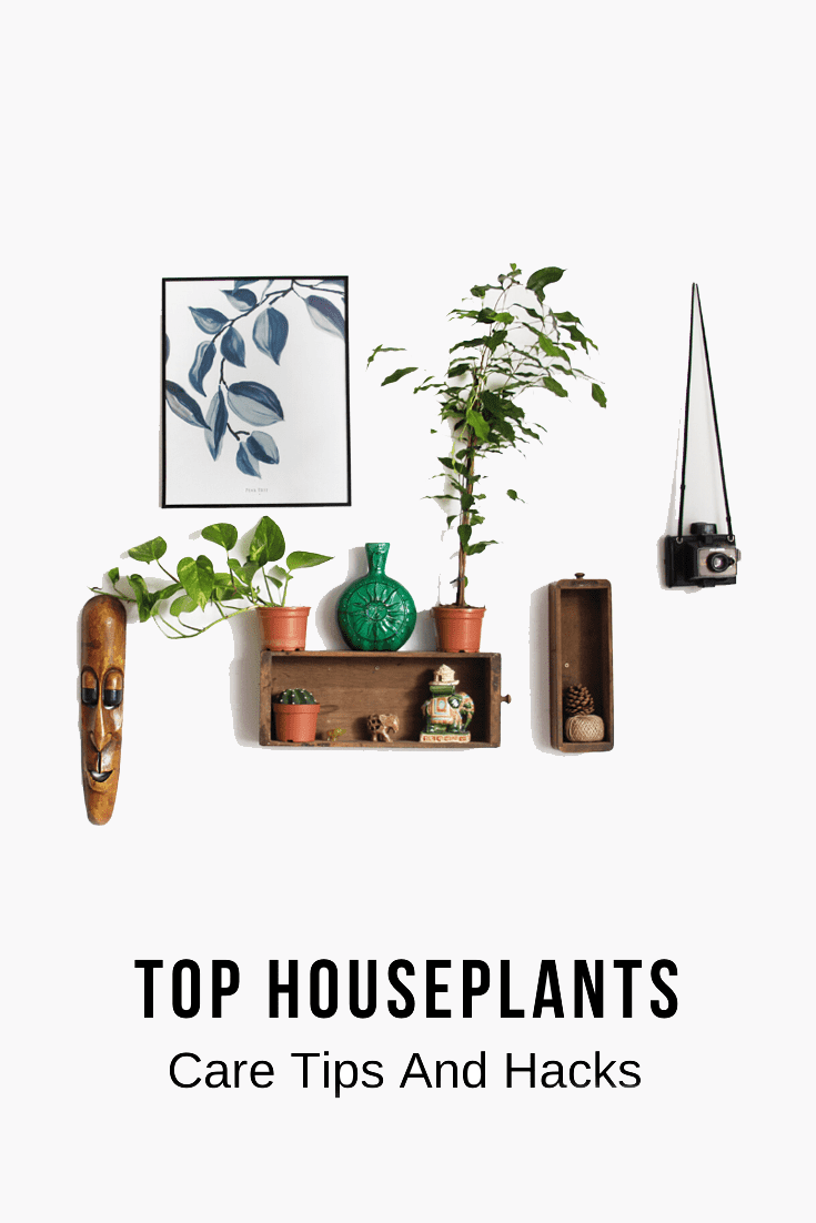 Houseplants Care Tips And Hacks You Didn't Know About