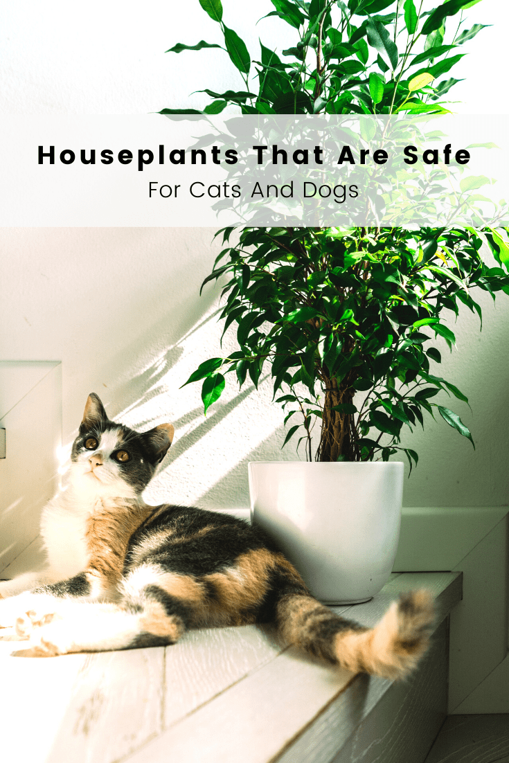Houseplants That Are Safe For Cats And Dogs