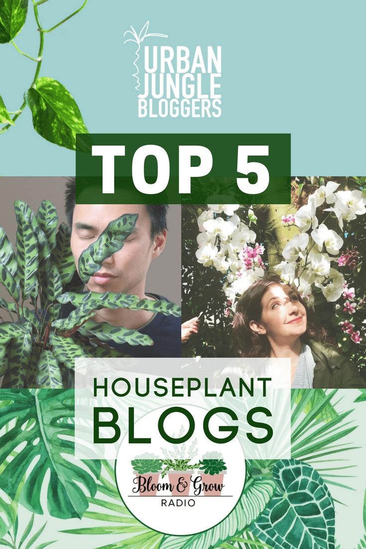 Houseplant Blogs Bloggers