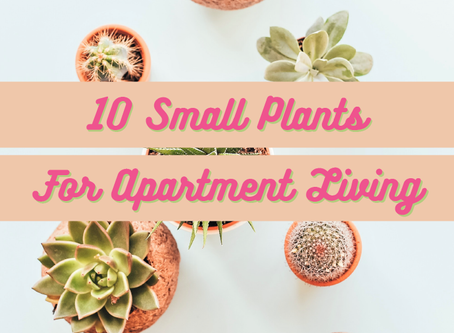 10 Small Plants For Apartment Living