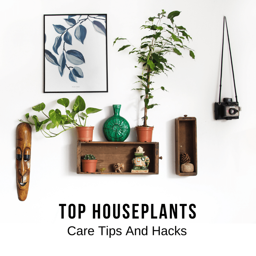 Top Houseplants Care Hacks And Tips