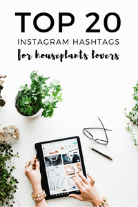 Houseplants Lovers Instagram Hashtags