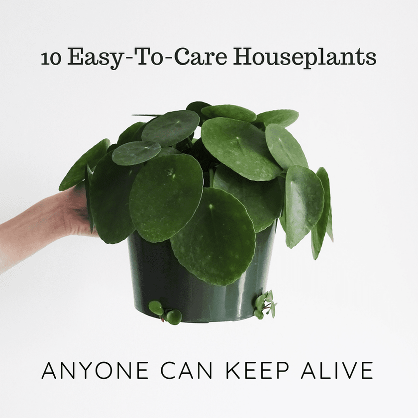 Easy-To-Care Houseplants Anyone Can Keep Alive