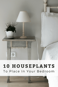 10 Houseplants To Place In Your Bedroom For a Good Night's Sleep
