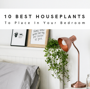 10 Best Houseplants To Place In Your Bedroom